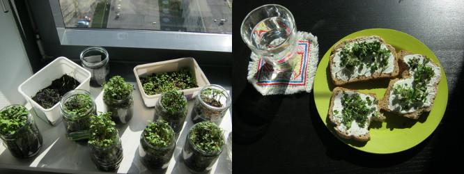 2013年5月5日:種から育てた植物(wat er uit de zaadjes is gekomen)