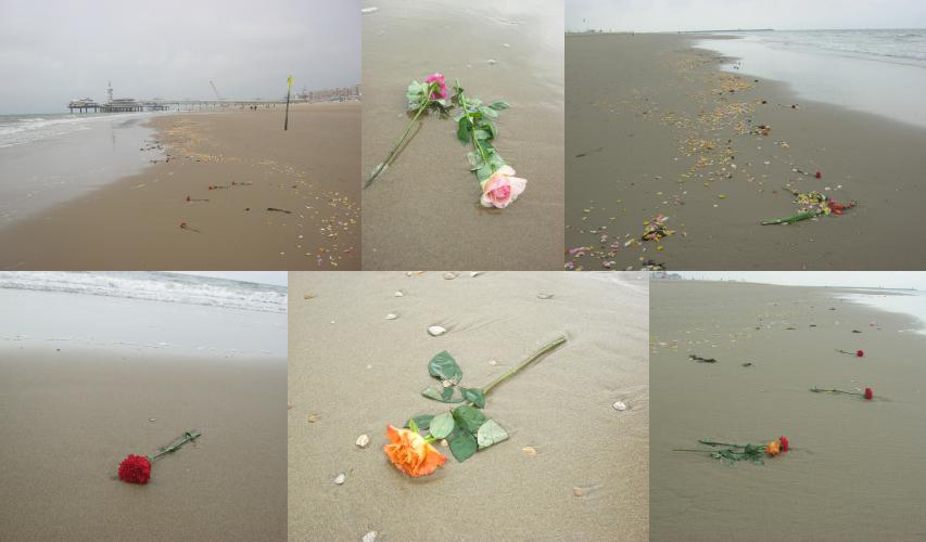 More flowers at Scheveningen beach