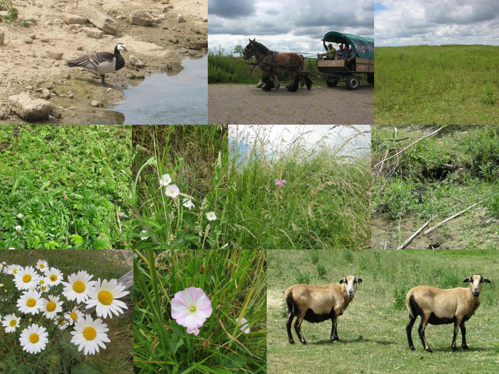 Plants and animals on Tiengemeten Island.