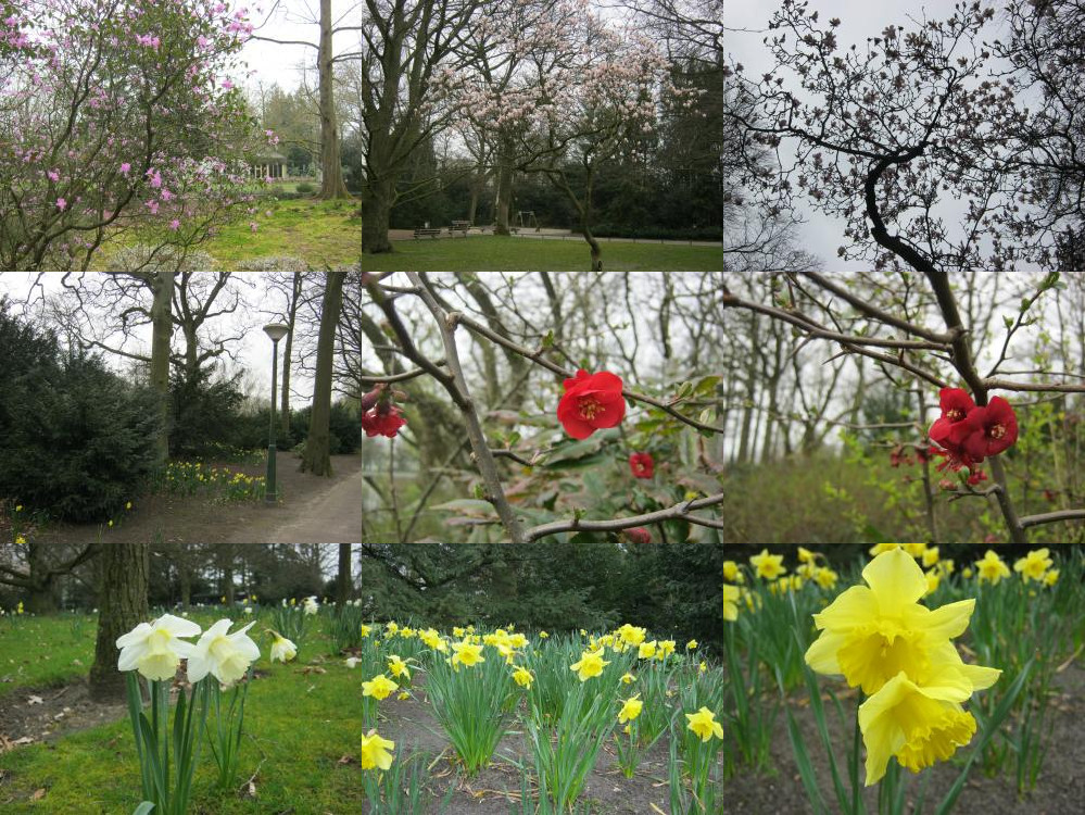 Bloemen in Stadswandelpark Eindhoven