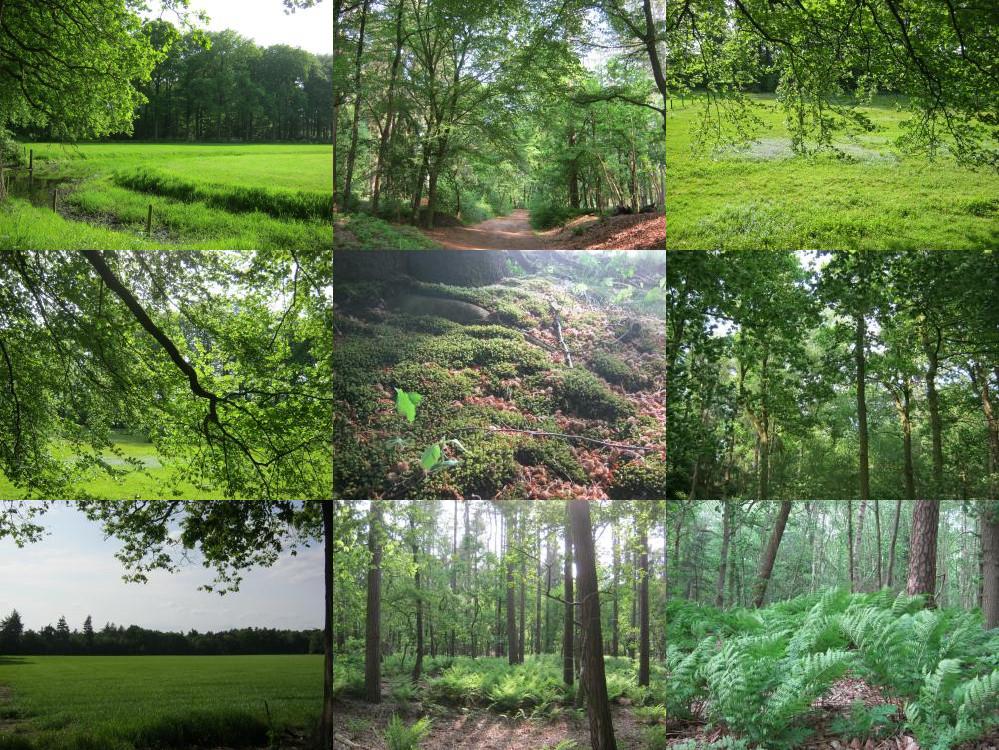 Het bos bij Doorn.