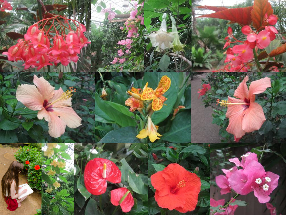 Mondo Verde rainforest flowers