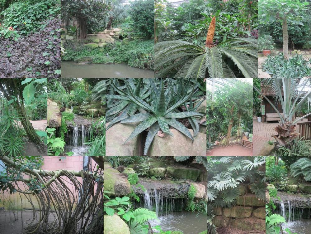 Mondo Verde rainforest plants