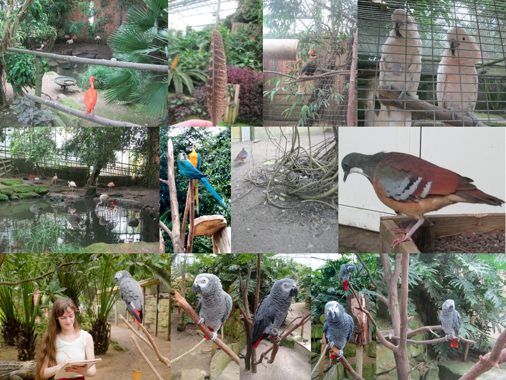 Mondo Verde rainforest birds