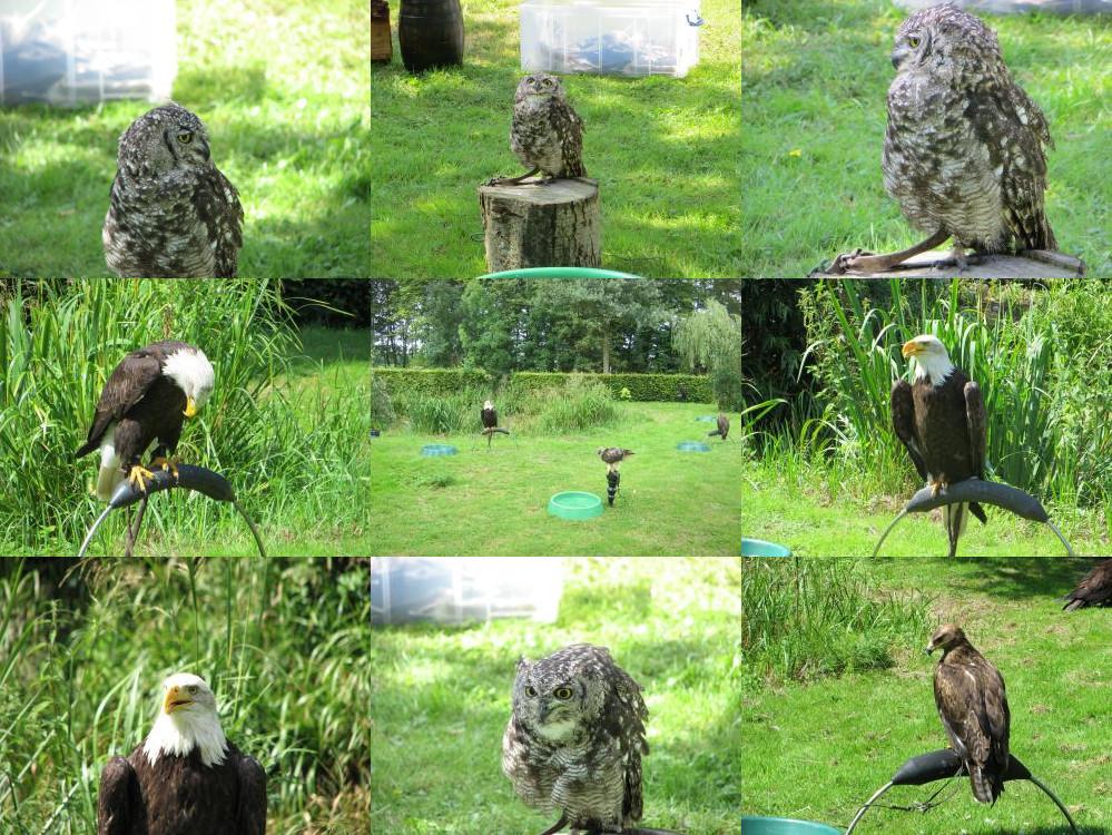 Bird show at Castlefest.